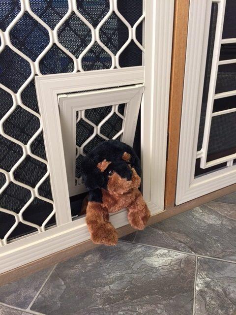 Pet Doors Southside Security Doors